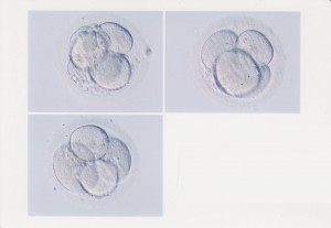Embryos that are no longer with us